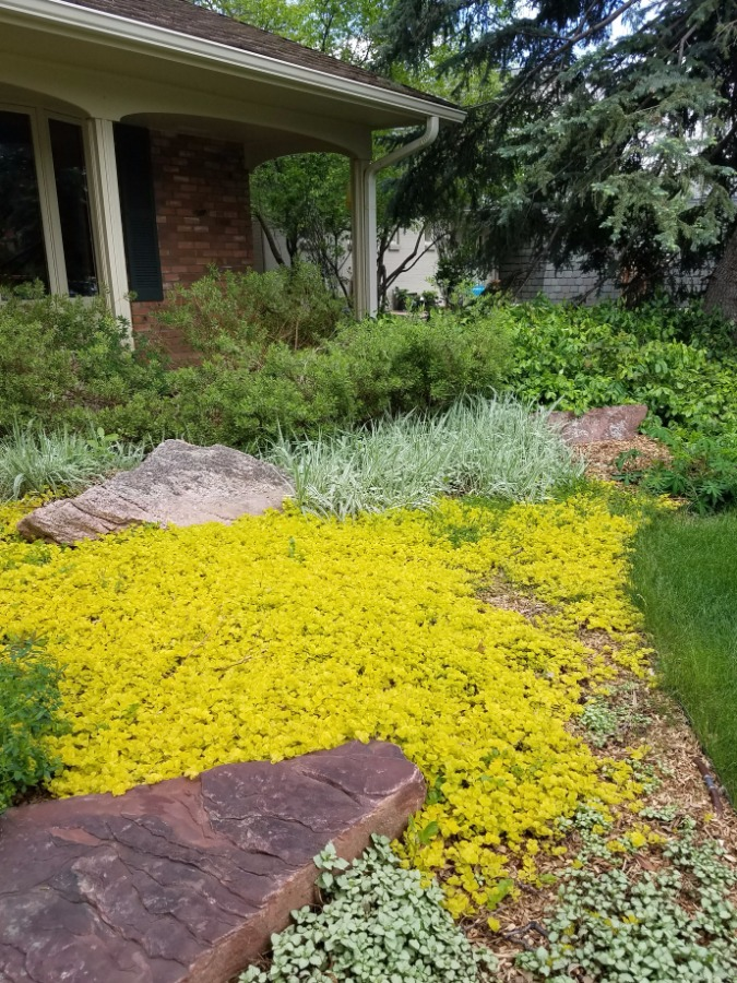 Sharp and appealing front landscaping
