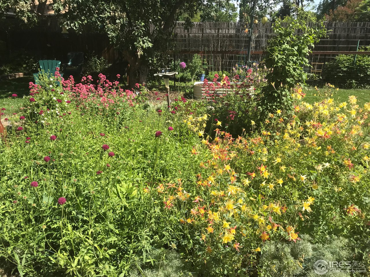 Mature Landscaping & Gardens