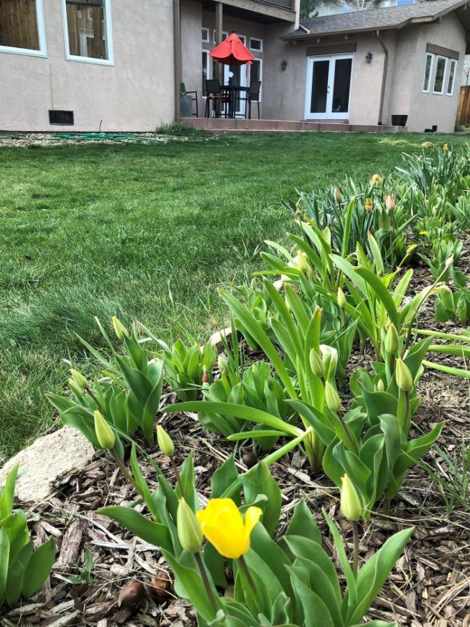 Springtime in Golden is the best!