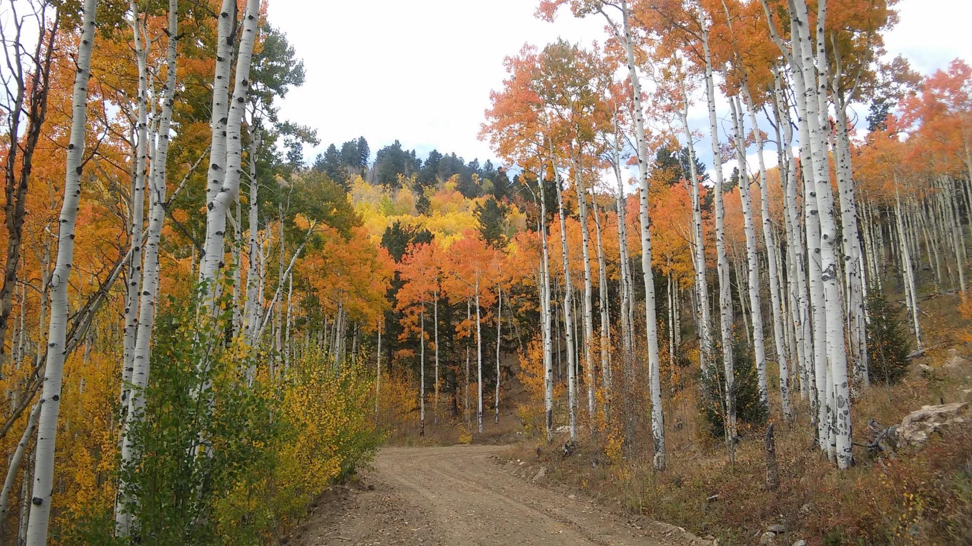 Fall Colors at 1799 Robinson Hill Road