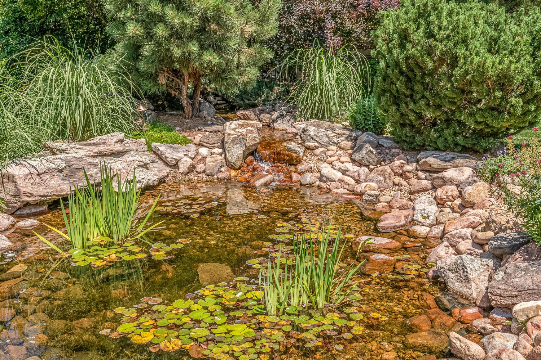 Your Minature Monet's Garden Pond