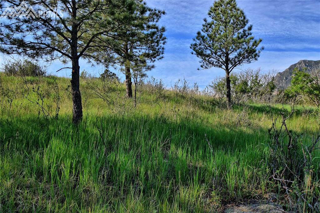 The north perimeter of the lot is lightly treed and provides privacy.