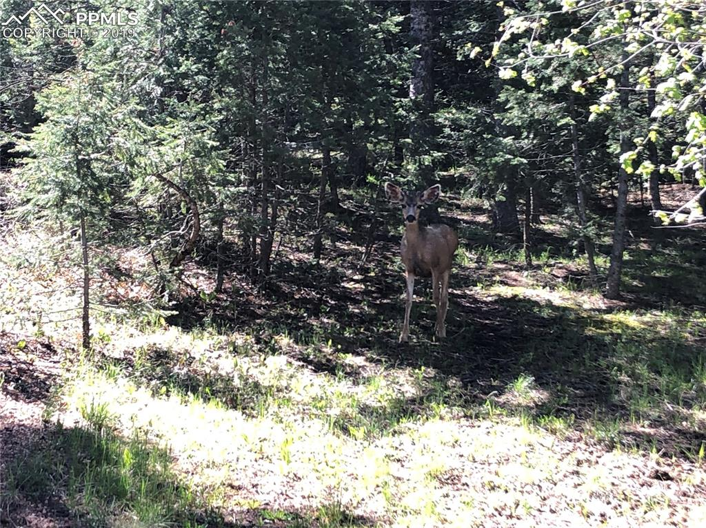 Young buck standing directly on a potential build site