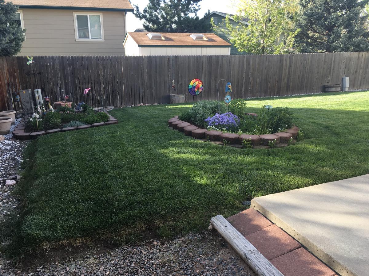 Summer Backyard