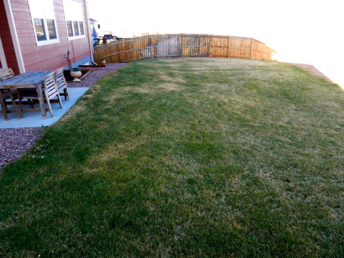 Huge Backyard for play
