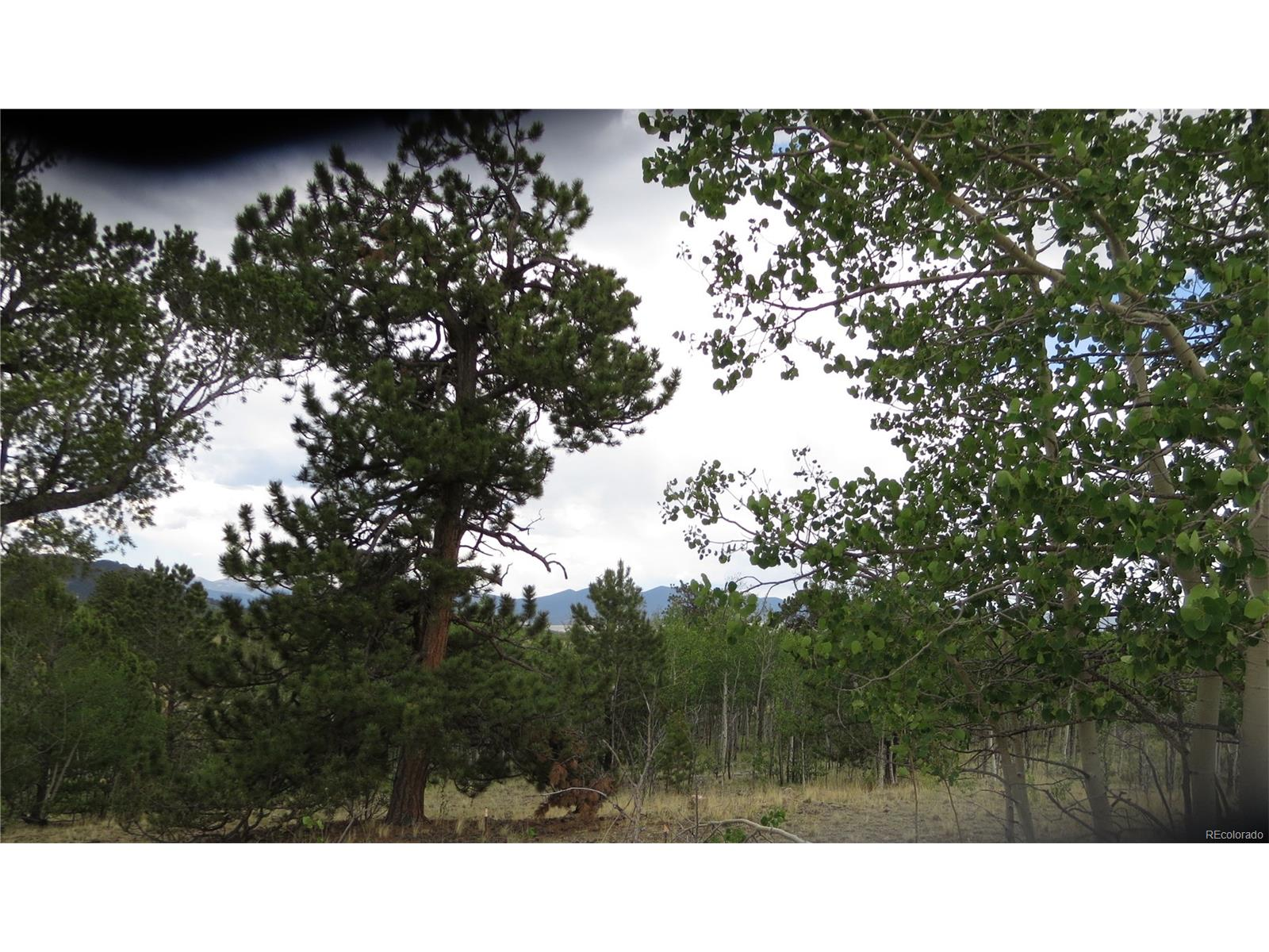 Pine and Aspen trees on subject property