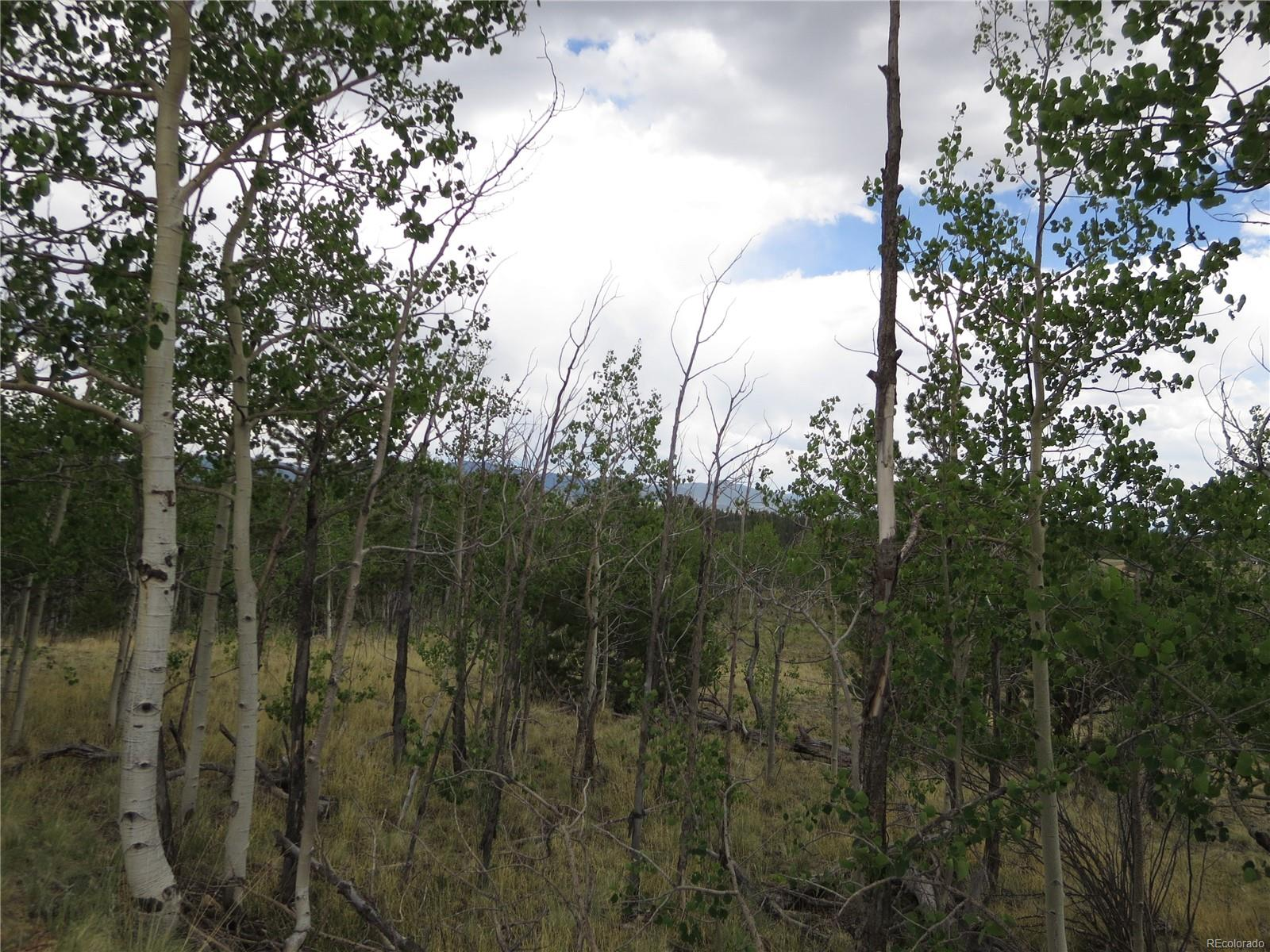 Aspen trees on subject property