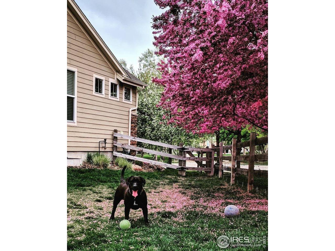 Side Yard in Spring Bloom