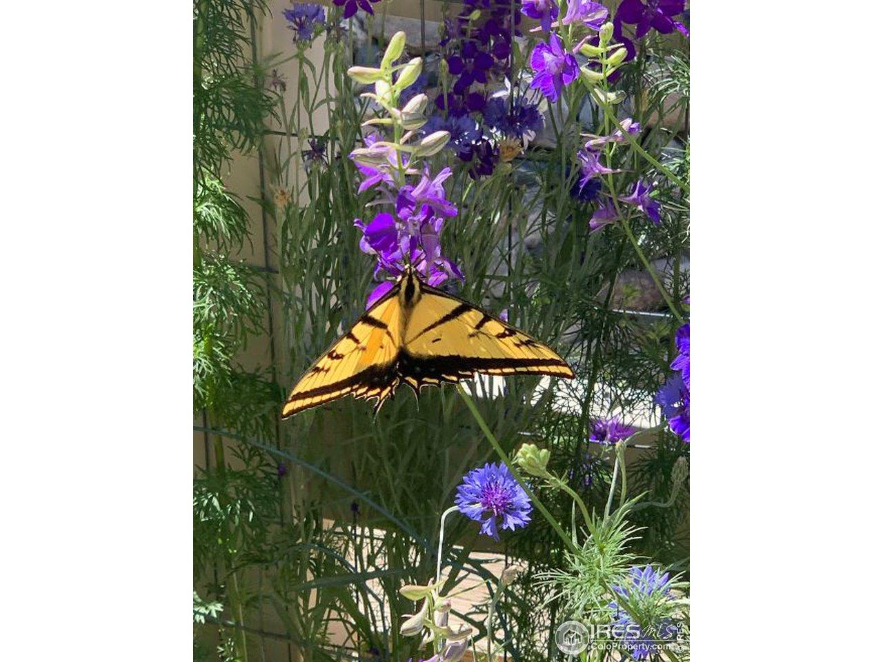 Blooms attract butterflies