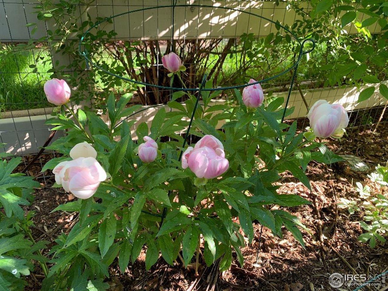 Perennial blooms all season
