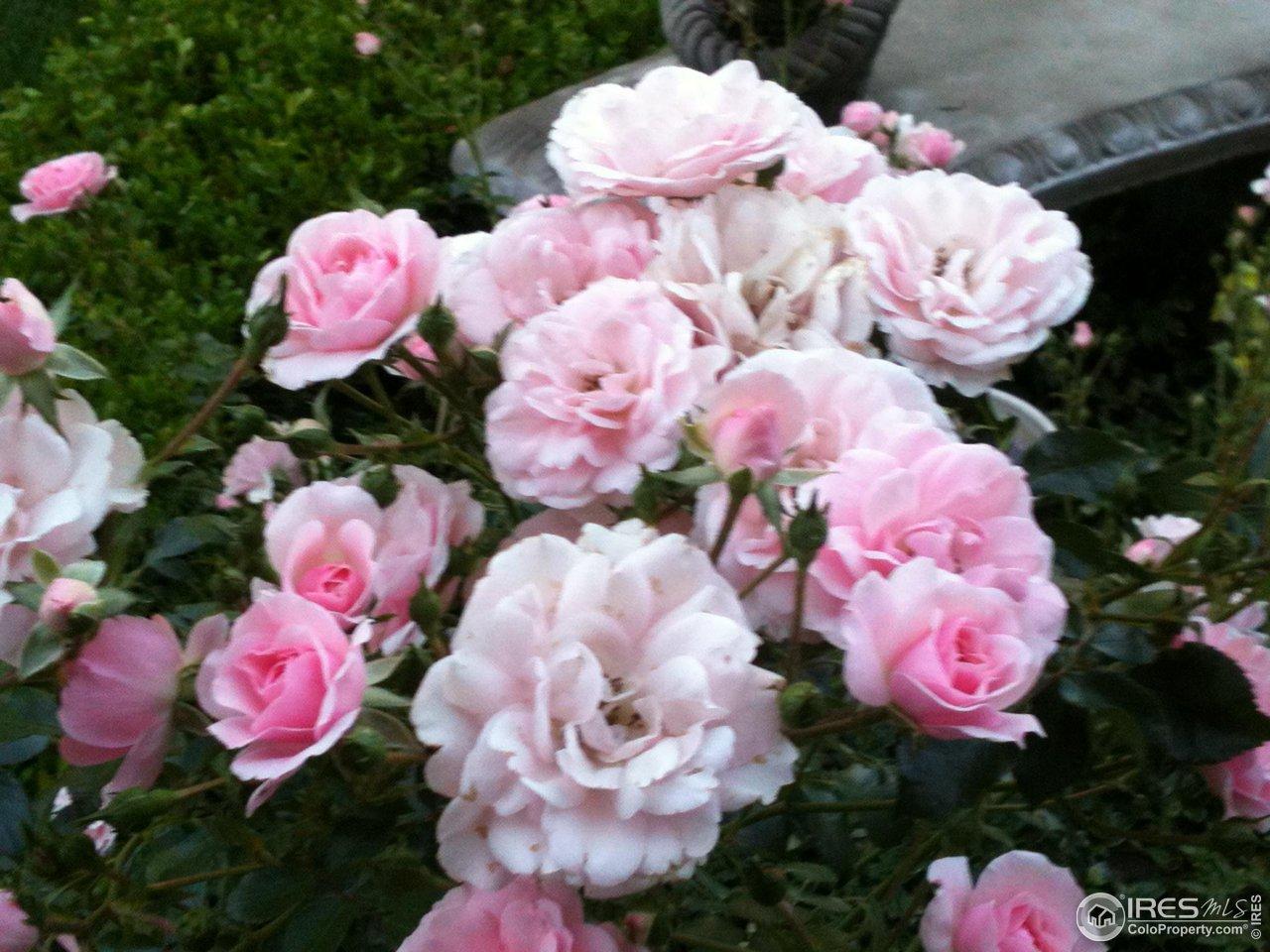 Historical Rose Garden