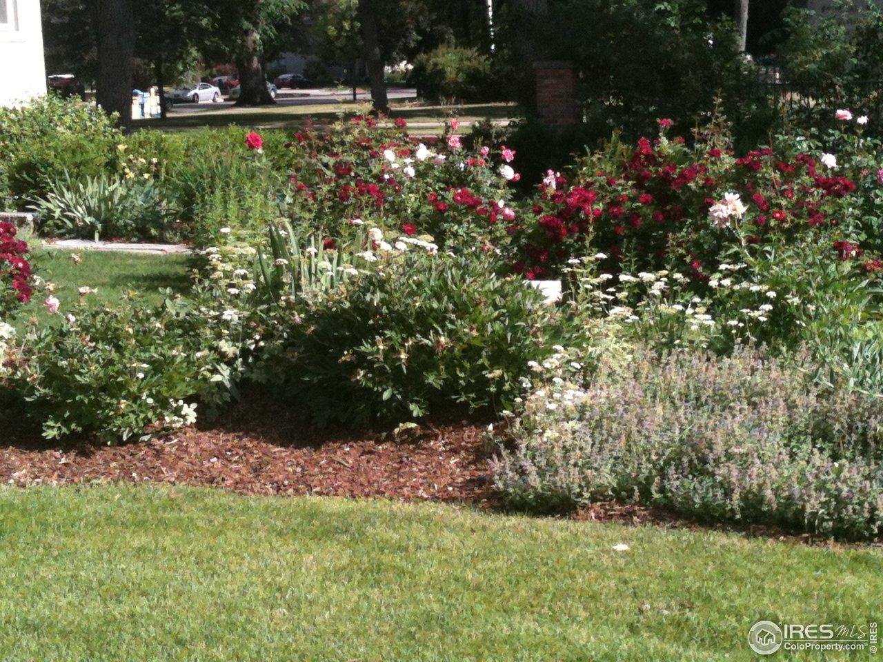 Historic Rose Garden