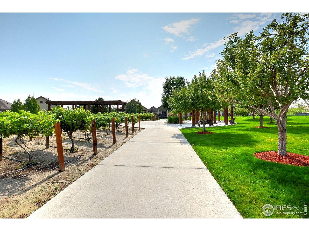 Pocket vineyard and orchard.