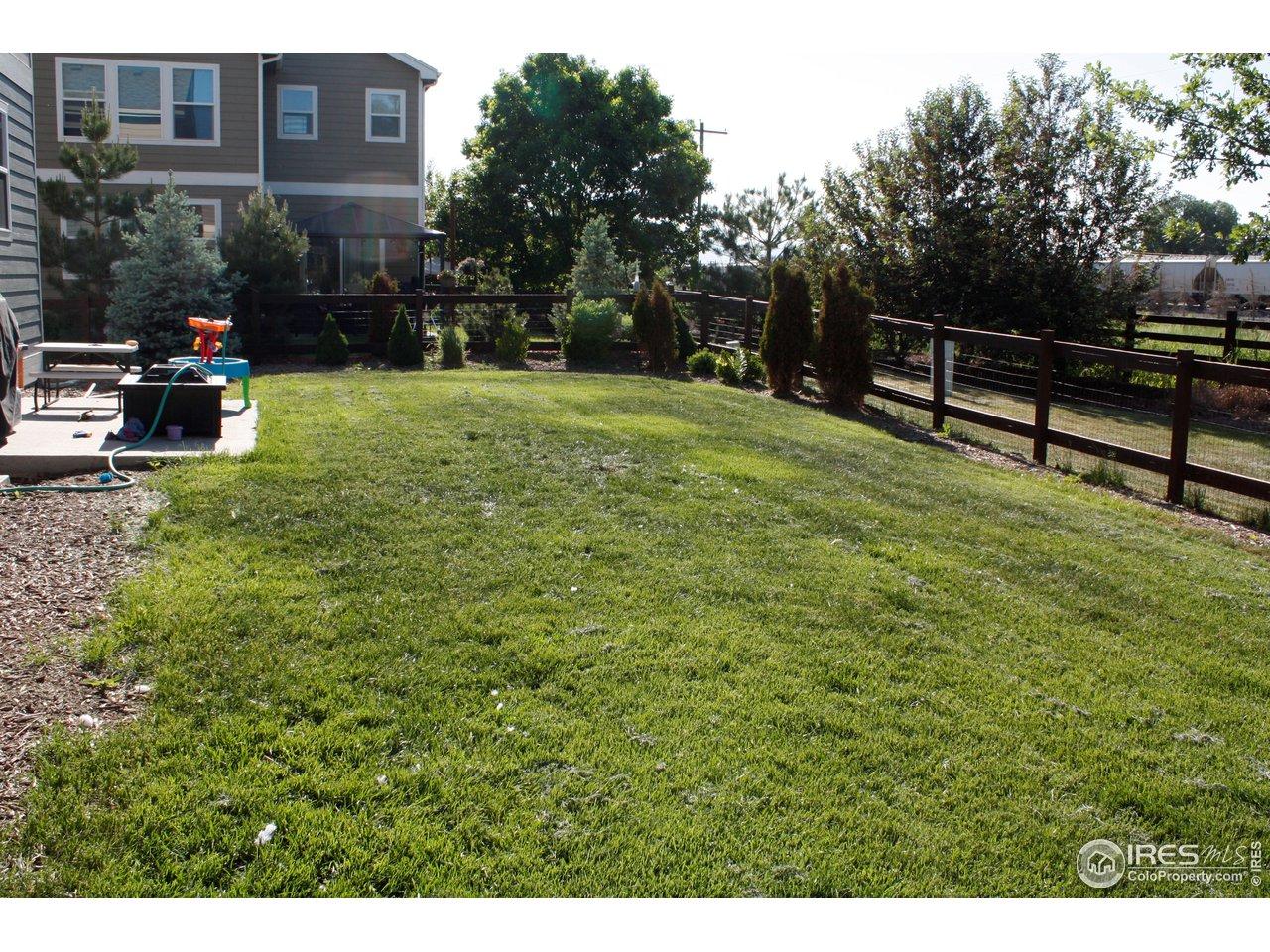 back yard side view