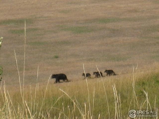 Sow mothering triplets seen every other year