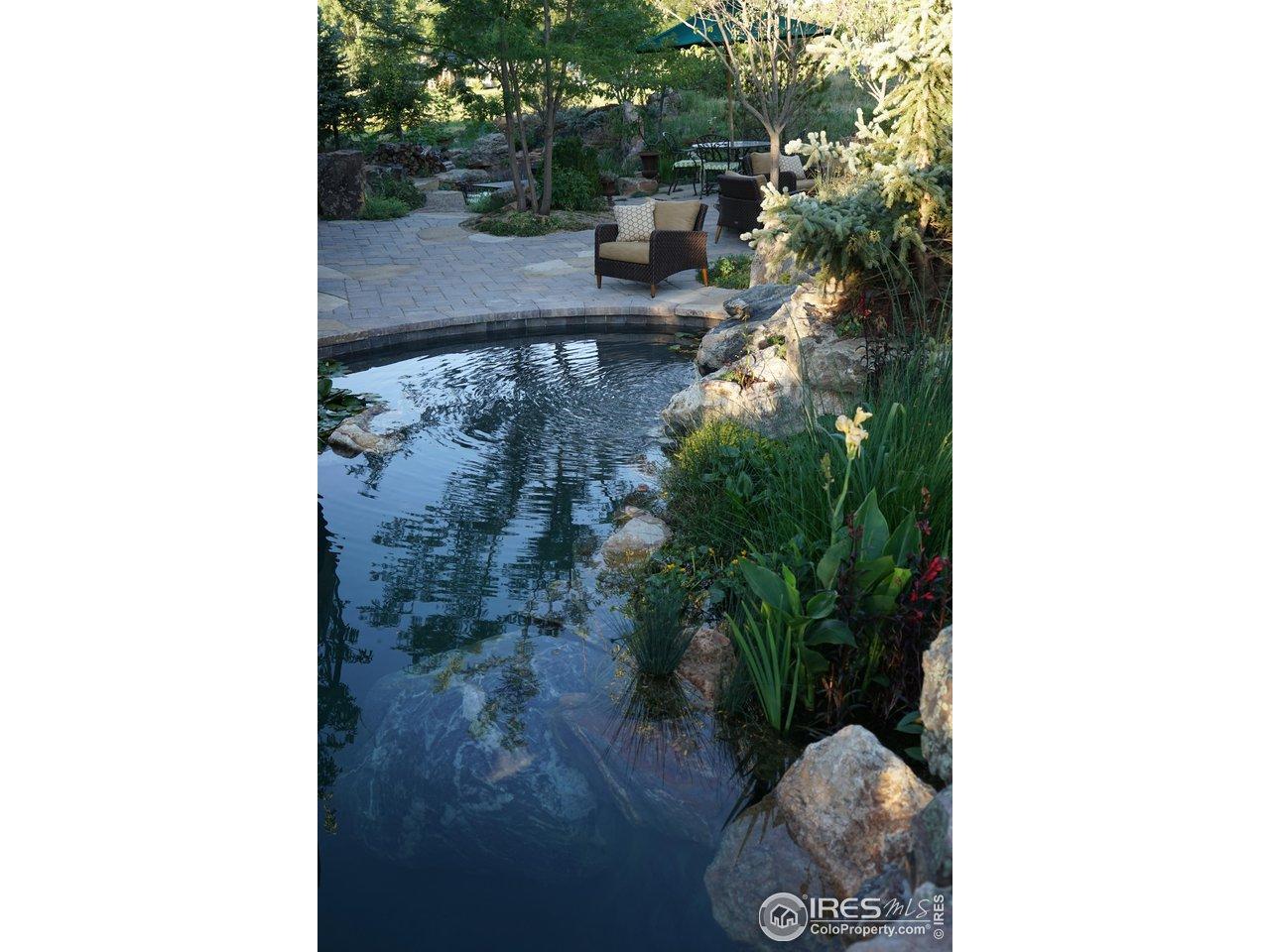 Bio filtration Pond