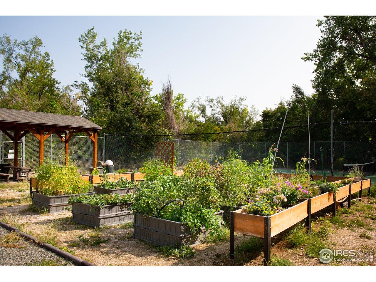 HOA gardens