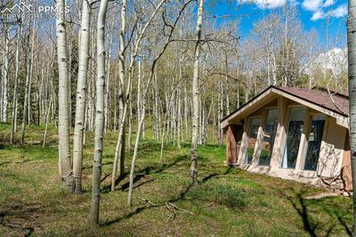 Its your very own aspen field