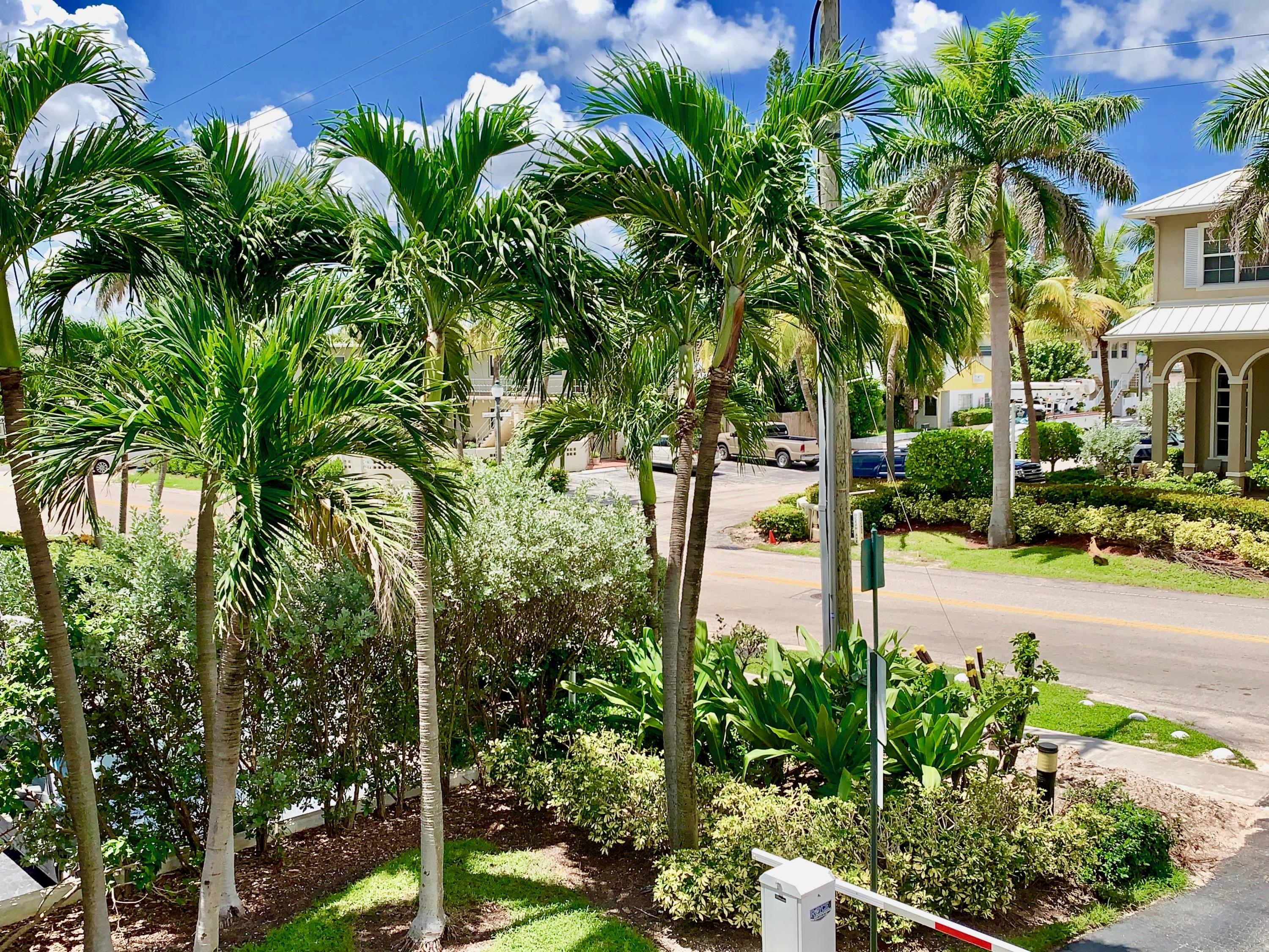 PALM TREED VIEWS OF TOWN