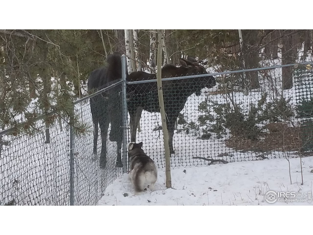 Moose/deer/elk frequent the property
