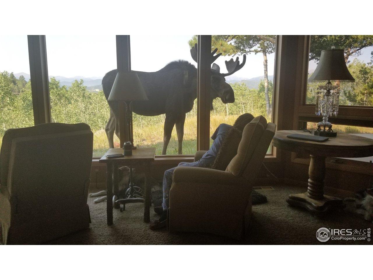 Hello Mr. Moose