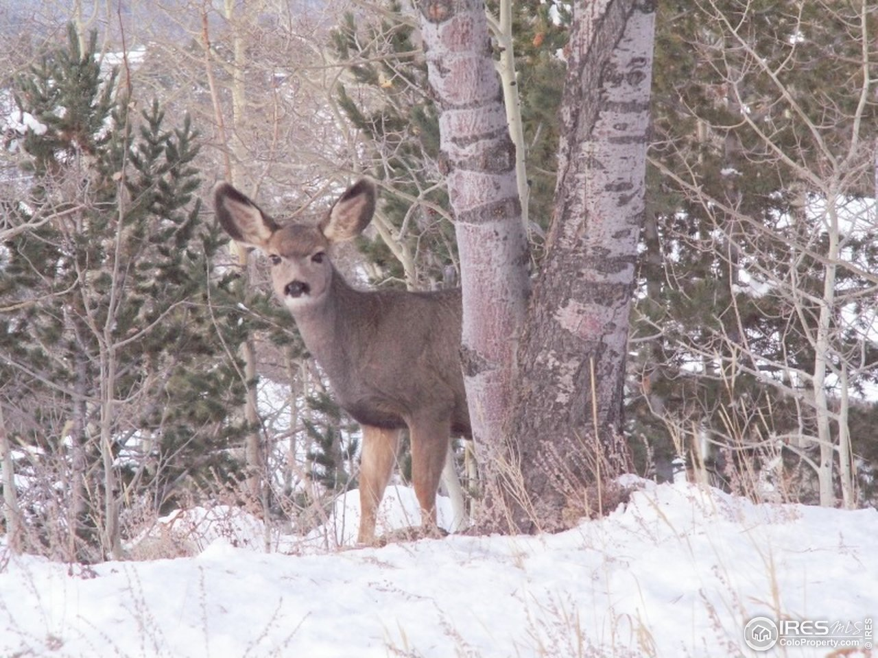 Plenty of wildlife frequent the property
