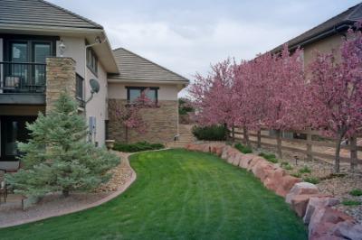 Enjoy Beautiful Fragrant Blooming Trees