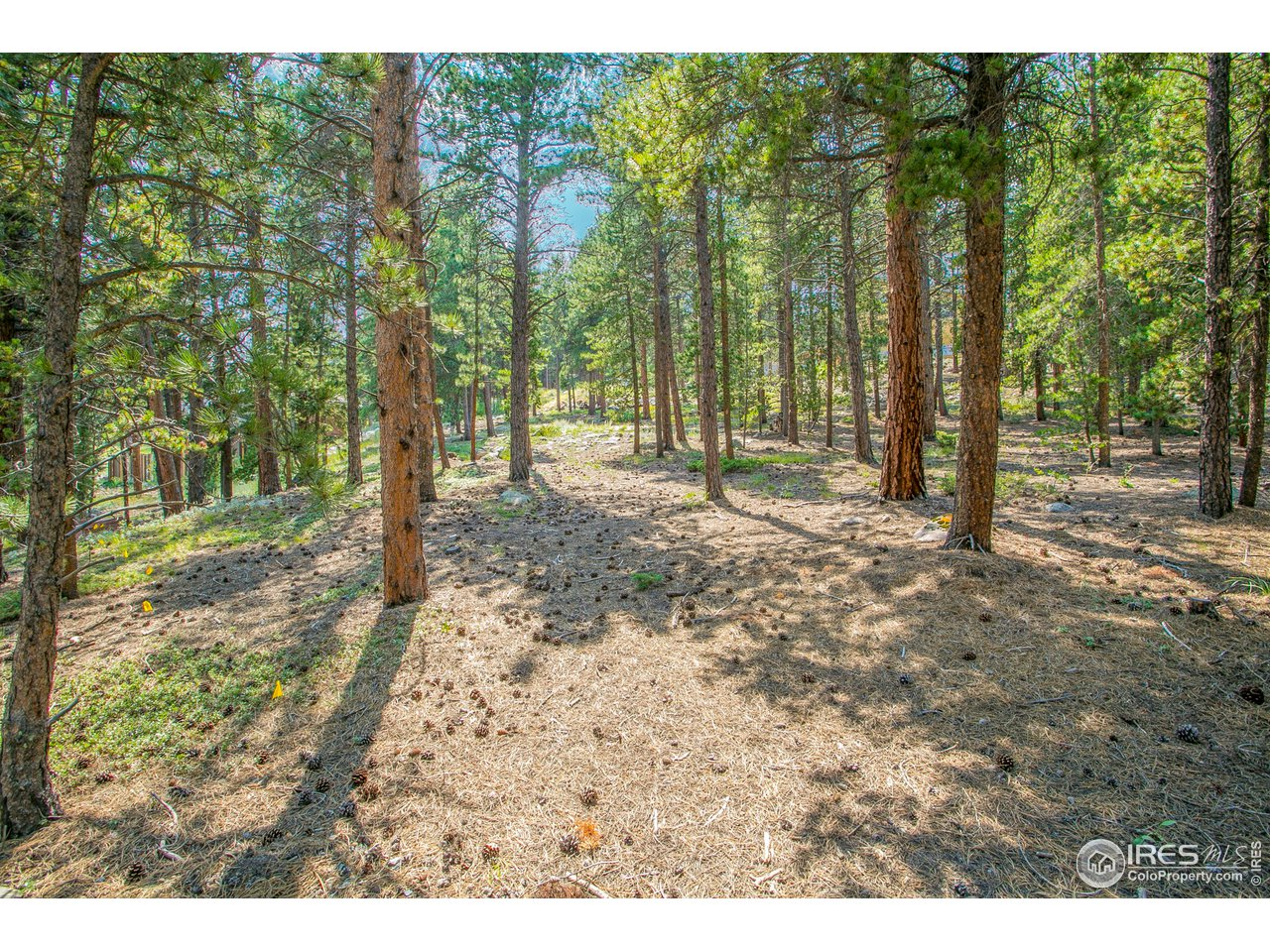 Your mountain oasis just 1 mile from downtown Nederland