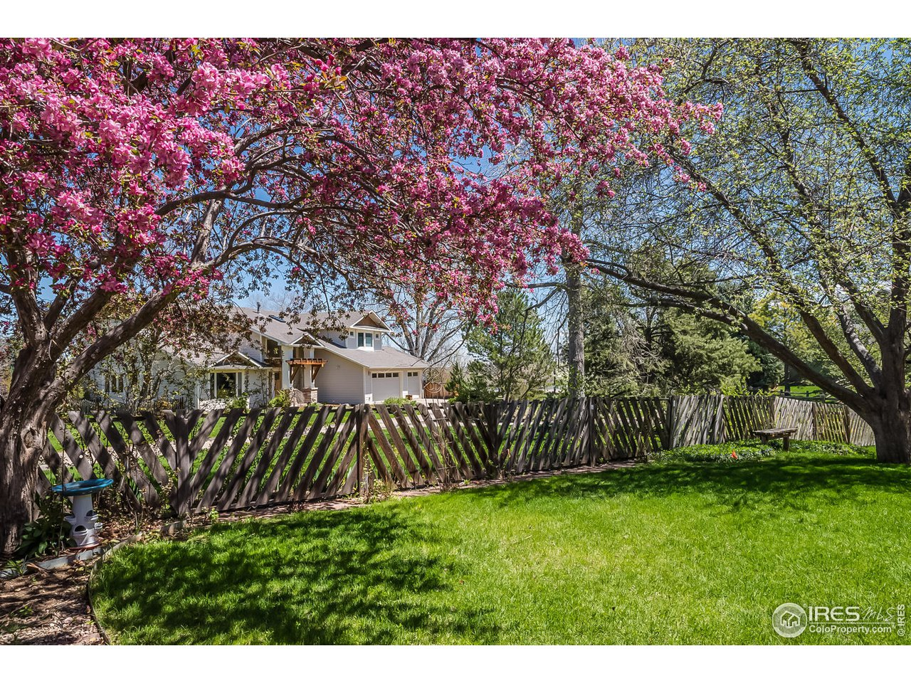 Backyard in Spring