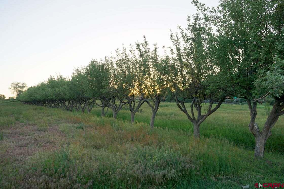 Golden, Jonathan and Dwarf Golden apples