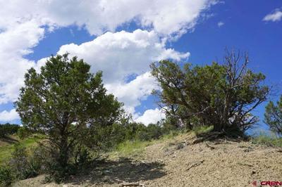 Juniper trees