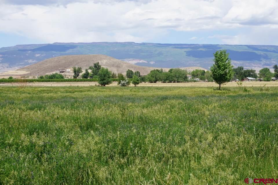 Looking east across fields toward West Elk mountains