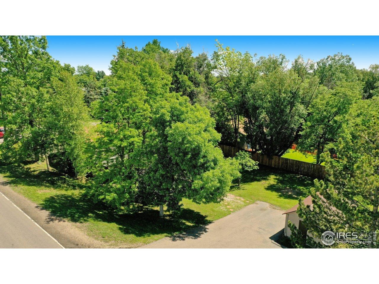 Lots of trees, mature yard