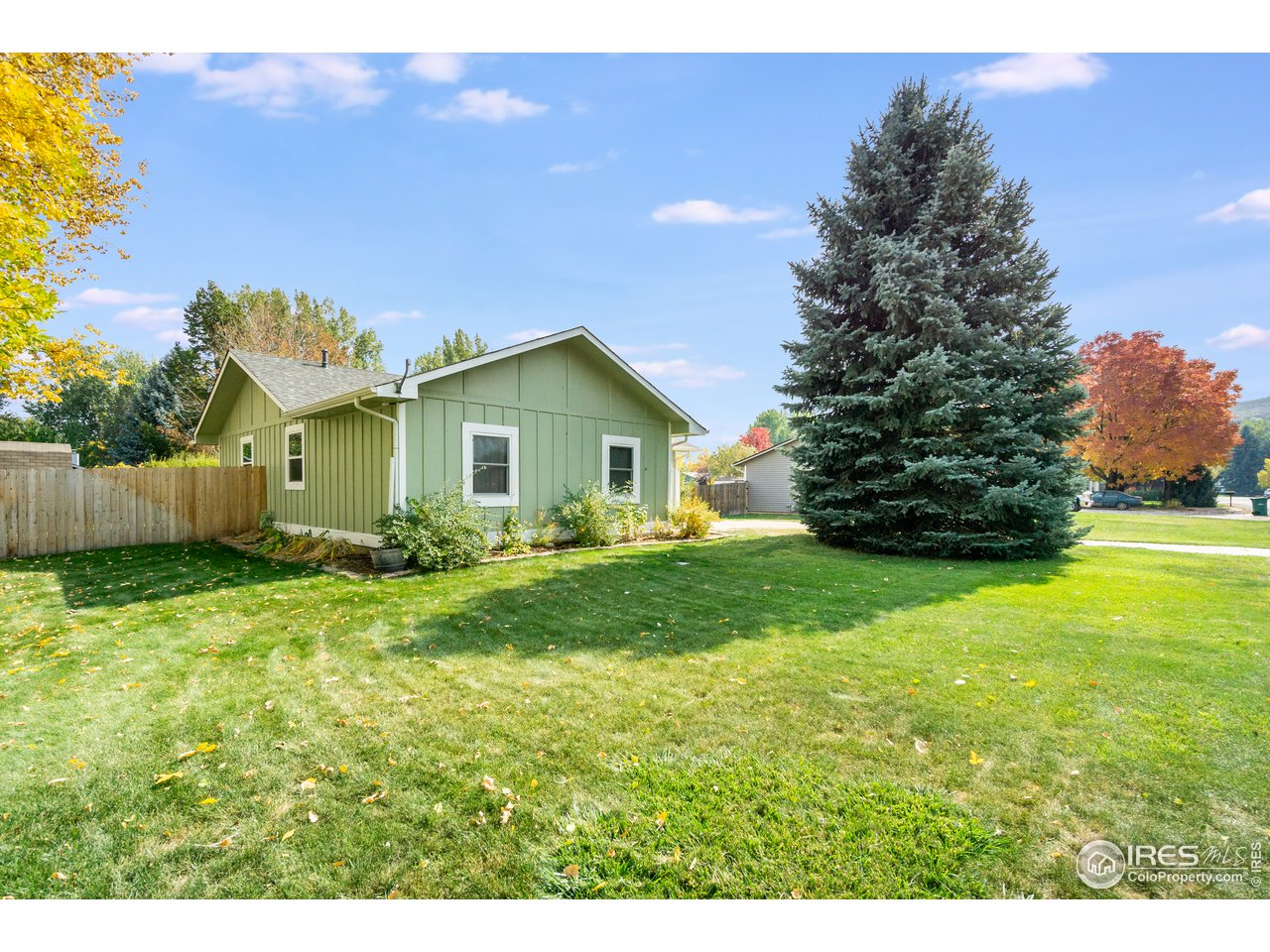 Great front yard with large blue spruce tree