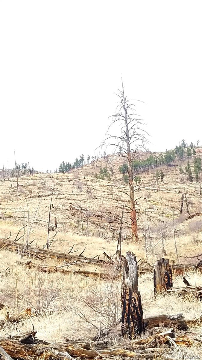 Tall tree marks South property line, looking North.