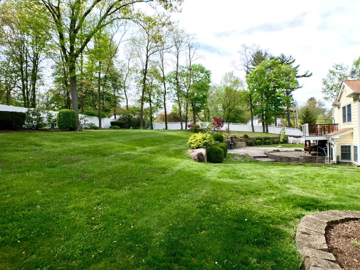 Lush Green in Backyard