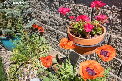 You'll love seeing this summer's bounty of pretty perennials like poppies, delphiniums and irises.