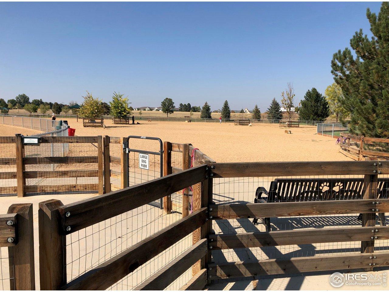 Large dog park